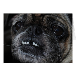 Cartão branco perolado dos dentes dos Pugs