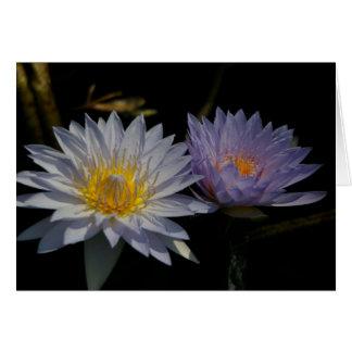 Cartão branco & roxo de Lotus Waterlily