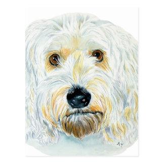 Cartão brancos de Labradoodle Maggie