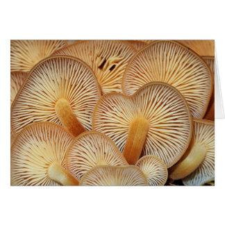 Cartão Brânquias do cogumelo do Mycena alaranjado