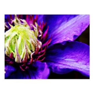 Cartão brilhante da arte da flor do clematis roxo