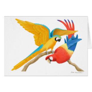 Cartão brincalhão dos Macaws