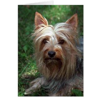 Cartão Brinquedo Terrier de seda