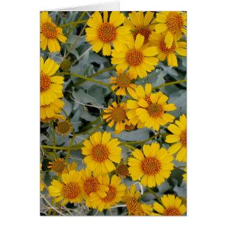 Cartão Brittlebush floresce cumprimentando