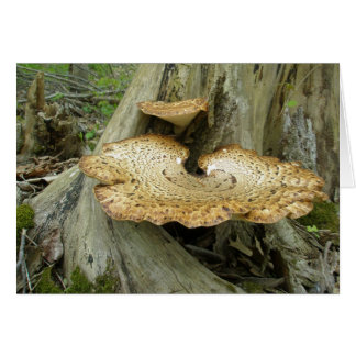 Cartão Brown listrou artigos de coordenação do fungo de