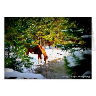 Cartão ~Buckie no passatempo Farm~ de Rogers