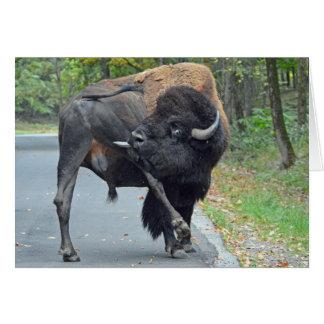 Cartão Búfalo engraçado