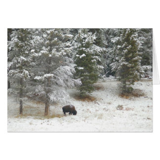 Cartão Búfalo solitário em Yellowstone