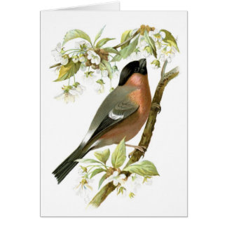Cartão Bullfinch
