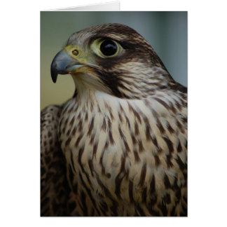 Cartão Cabeça do falcão