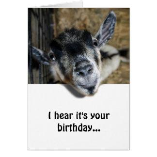 Cartão Cabra Nosy que olha acima - o aniversário