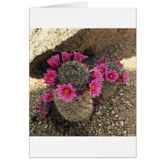 Cartão Cacto cor-de-rosa na flor