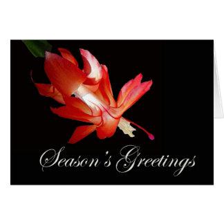 Cartão Cacto de Natal vermelho dos cumprimentos da