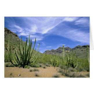 Cartão Cacto do deserto no monumento nacional de