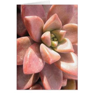 Cartão Cacto do Succulent