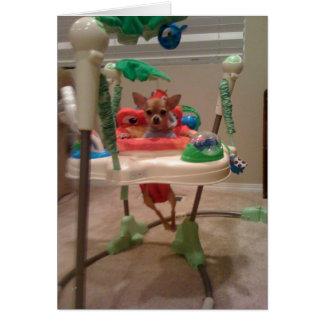 Cartão cadeira bouncy da chihuahua