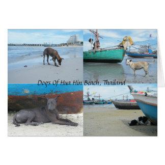 Cartão Cães da praia de Hua Hin, Tailândia