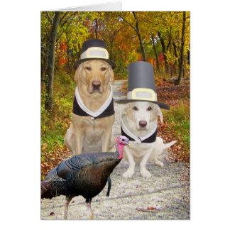 Cartão Cães engraçados/acção de graças dos laboratórios