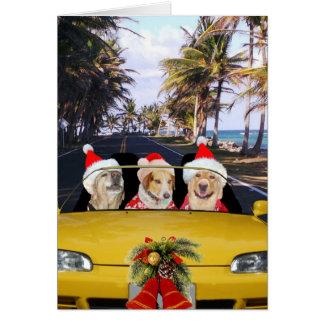 Cartão Cães/laboratórios em chapéus convertíveis de