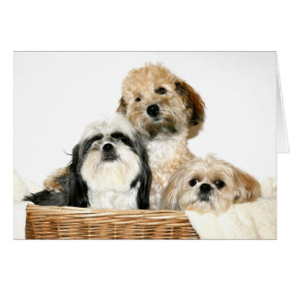 Cartão Cães na cesta de lavanderia