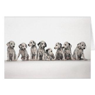 Cartão cães pupy do cão de filhotes de cachorro do