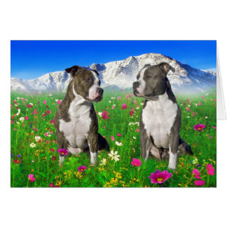 Cartão Cães rajados & azuis de Staffordshire & de pitbull
