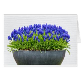 Cartão Caixa cinzenta da flor do metal com os jacintos de
