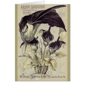 Cartão Calla preto Lillies do vintage