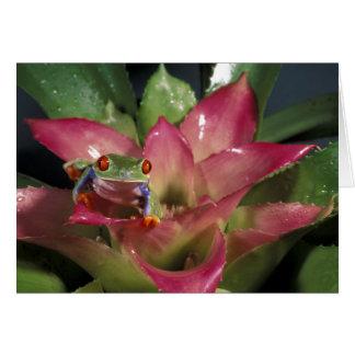 Cartão callidryas Vermelho-eyed de Agalychnis do sapo de