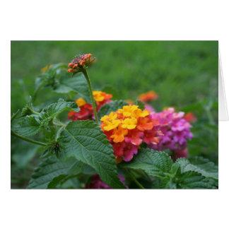 Cartão [Camara do Lantana das flores coloridas] - alguma