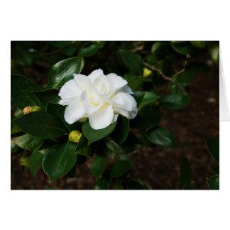 Cartão Camélia branca