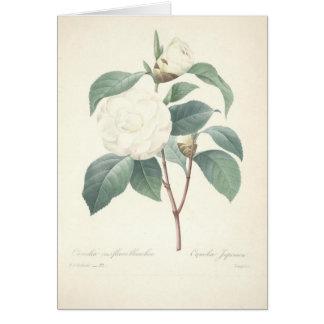 Cartão Camélia branca por Redoute