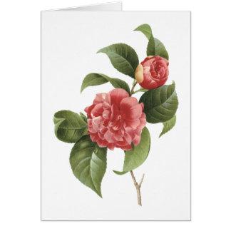 Cartão camélia comum (japonica da camélia) por Redouté