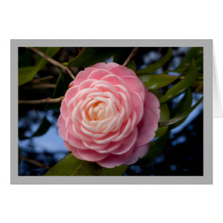 Cartão Camelia cor-de-rosa da perfeição dos namorados 49
