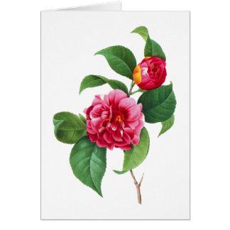 Cartão Camélia vermelha por Pierre Joseph Redoute