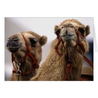 Cartão Camelos