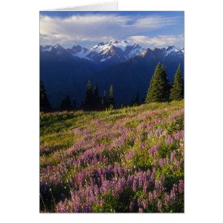 Cartão Campo do lupine, do Monte Olimpo, e das nuvens em