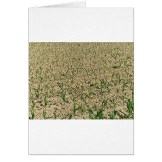 Cartão Campo do milho do milho verde na fase inicial