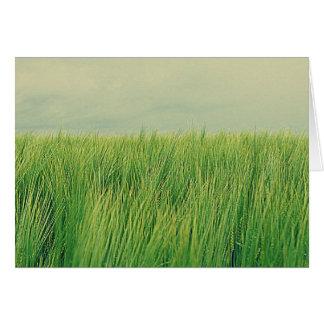 Cartão Campo verde