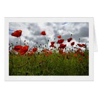 Cartão Campo vermelho da papoila, Dorset