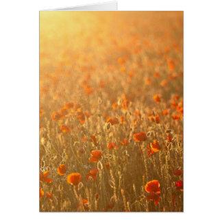 Cartão Campos da papoila na luz do sol