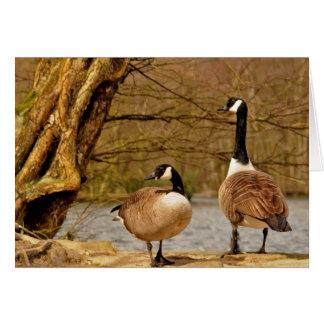 Cartão Canadá geese002