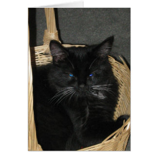 Cartão cândido dos gatinhos