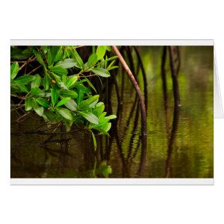 Cartão Canoeing através dos manguezais quietos
