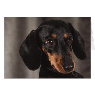 Cartão Cão bonito do Dachshund do olho do filhote de