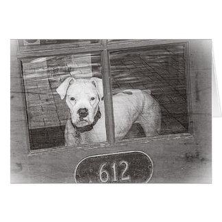 Cartão Cão branco do pugilista atrás da porta, preto e
