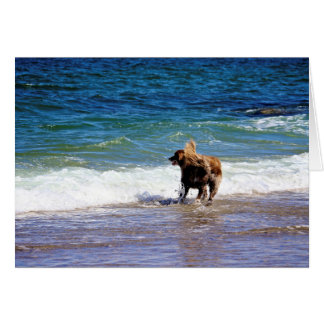 Cartão Cão da praia