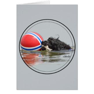 Cartão Cão de água português com bola da bóia