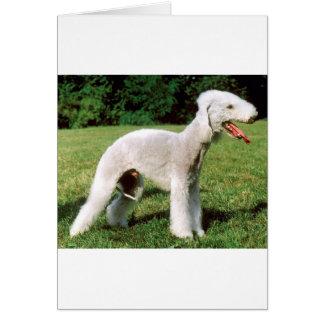 Cartão Cão de Bedlington Terrier