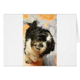 Cartão Cão de FB_IMG_1481505521015 Shitzu